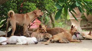 สาธารณสุข ยันคุมโรคพิษสุนัขบ้าได้ แม้ระบาดหนักในหลายพื้นที่