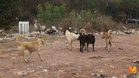 พบสุนัขจรจัดกว่า 200 ชีวิต ที่บ่อขยะเขาพลองยังไม่ได้รับวัคซีน