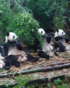 Panda Diary อู๊ลั่นล้า แพนด้ามาเป็น10