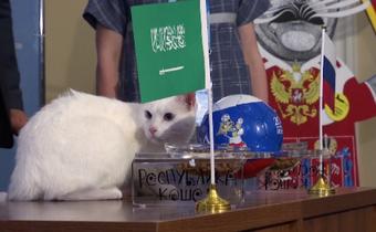 """แมวทำนายผลบอลโลกนัดเปิดสนาม """"รัสเซีย"""" ชนะซาอุฯ"""