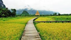 ทุ่งคอสมอส เหลืองสะพรั่ง บานรับลมหนาวต้นปี กลางหุบเขาจีนแล จ.ลพบุรี