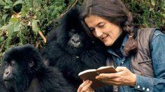 Dian Fossey ผู้เปลี่ยนแปลงชะตาชีวิตกอริลล่าทั้งโลก!!!