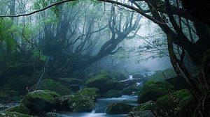 ท่องป่าดึกดำบรรพ์ยากุชิมะ เสน่ห์ลึกลับแห่ง เกาะยากุ ญี่ปุ่น