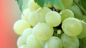 ประโยชน์ของการกินผัก-ผลไม้