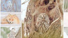 7 สัตว์มหัศจรรย์แห่งฮอกไกโด ที่น่ารักจนอยากอุ้มกลับบ้าน