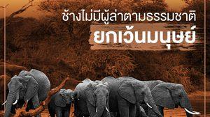คนดังนับร้อย ปลุกกระแสชวนคนไทย #ไม่เอางาไม่ฆ่าช้าง