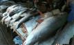 จับปลาบึกยักษ์หนักกว่า 100 กก.หลังน้ำโขงลด