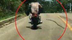 งูสวมหัวใจหมา กระโดดฉกคนขี่รถจักรยานยนต์