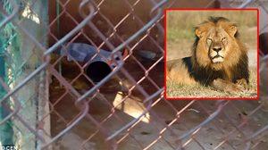 พนักงานสวนสัตว์เข้าไปทำความสะอาดกรง สิงโต แต่โดนขย้ำจนเสียชีวิตคาที่