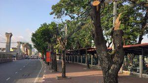 กรมป่าไม้ ยันอิตาเลี่ยนไทยไม่ผิด ตัดต้นไม้ใน กทม. เล็งรื้อคดีสร้างรีสอร์ทเขาค้อ