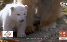 เผยโฉมหมีขั้วโลกเกิดในอังกฤษตัวแรก รอบ 25 ปี