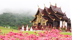 """เที่ยว """"อุทยานหลวงราชพฤกษ์"""" เชียงใหม่ ชมดอกไม้บาน ต้อนรับลมหนาว"""