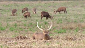 ทำสำเร็จ กรมอุทยานฯ ปล่อยสัตว์ป่าใกล้สูญพันธุ์ คืนสู่ธรรมชาติกว่าร้อยตัว