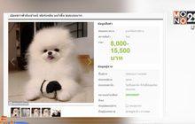 บุกจับแก๊งหลอกขายหมา-แมวผ่านเว็บไซต์สูญเงิน 2 ล้าน