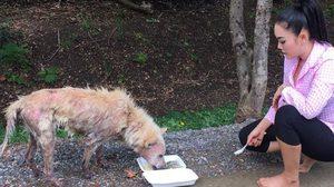 ชื่นชม! หญิง ธิติกานต์ อาร์สยาม ให้อาหารหมาขี้เรื้อน