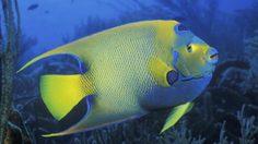 ชมปลาสวยงาม ลดค่าเข้าชม 40% รับวันแม่ ที่ซีไลฟ์ แบงคอก