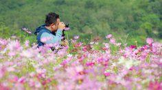 ชวนไปถ่ายรูปสวยๆ ทุ่งดอกคอสมอสสีชมพู ณ สวนละไม จ.ระยอง