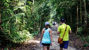 ทรีท็อป วอล์คกิ้ง .. ท่องป่า สัมผัสลมหายใจของสิงคโปร์