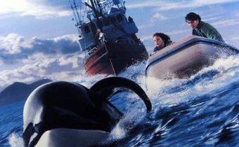 Free Willy 3 : The Rescue ฟรี วิลลี่ เพื่อเพื่อนด้วยหัวใจอันยิ่งใหญ่ 3
