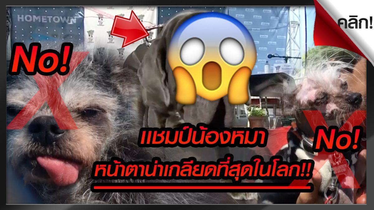 """(คลิปเด่นต่างประเทศ) ประกวดสุนัขน่าเกลียดที่สุดในโลก แชมป์ใหม่เจ้า""""มาร์ธา"""""""
