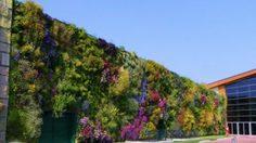 สวนแนวตั้งที่ใหญ่ที่สุดในโลก บนกำแพงห้างฯ ประเทศอิตาลี