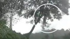 ถ่ายติดผีสาวห้อยต่องแต่งคากิ่งไม้