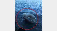 คลิปนาที สุนัขสวมบทฮีโร่ กระโดดช่วยลูกกวางตกน้ำ