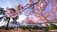กิจกรรมต้องห้ามพลาด ช่วงฤดูใบไม้ผลิที่ญี่ปุ่น โดย ปริ๊นซ์ โฮเต็ล