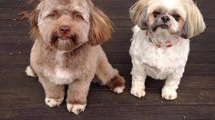 อึ้งไป 3 วิ! เจ้า Yogi สุนัขที่ได้ชื่อว่า มีใบหน้าเหมือนมนุษย์มากที่สุด