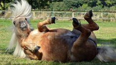 10 ภาพฮาๆ น่ารัก ของสัตว์โลกน่ารัก ที่คนรักสัตว์ทั่วโลกส่งภาพเข้ามาร่วมสนุก