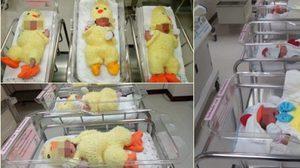 โรงพยาบาลเปาโลโชคชัย4 แต่งชุดลูกเจี๊ยบให้ทารก รับปีระกา2560