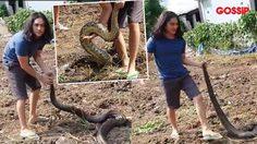 คนดูหัวใจจะวาย!! แน็ก ชาลี จับงูเหลือมมือเปล่า?