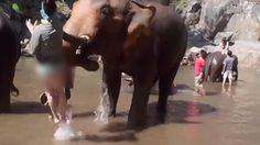 ระทึก! ช้างขวิด นทท.สาวต่างชาติ ตัวปลิวหลายเมตร