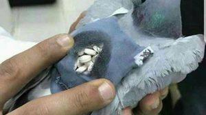 นกพิราบ, ขนยาเสพติด, ยาเสพติด, ข่าวคูเวต