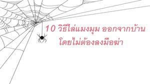 10 วิธีไล่แมงมุม ออกจากบ้าน ฉบับภูมิปัญญาชาวบ้าน งานนี้ไม่ต้องลงมือฆ่า
