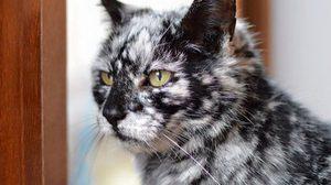 เจ้าของอึ้ง! เมื่อแมวดำตัวโปรด เปลี่ยนสีขนกลายเป็นแมวหายากซะงั้น