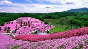 7 เหตุผล ที่เราควรจะไปเที่ยวญี่ปุ่น