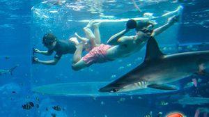 ดำน้ำลึก.. เผชิญหน้าฉลามกับ ชาร์ค เอนเคาน์เตอร์
