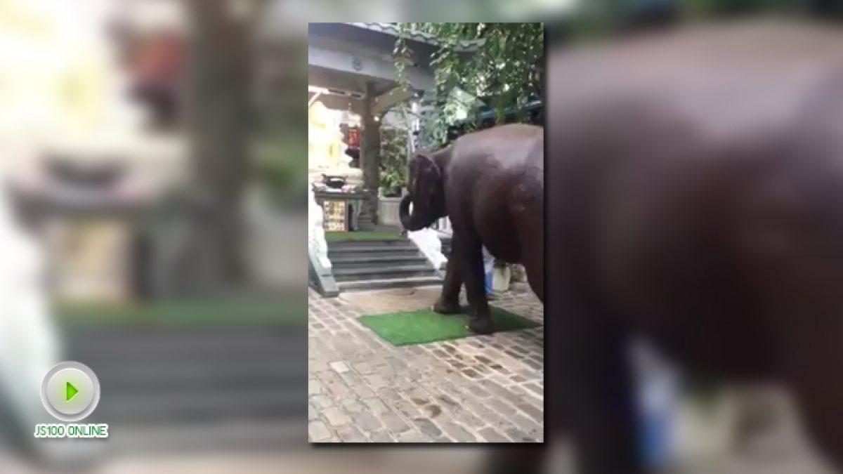 เจ้าช้างแสนรู้ กราบพระพุทธรูป