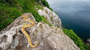 Queimada Grande เกาะงูคลั่ง หนึ่งในเกาะอันตรายที่สุดในโลก!