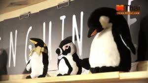 penguin eat shabu เพนกวินกินชาบูบุฟเฟ่ต์ สาขา สะพานควาย