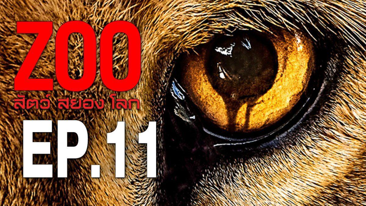 Zoo สัตว์ สยอง โลก ปี 2 EP.11