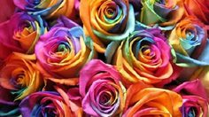 Fancy Colored Roses For The Season Of Love