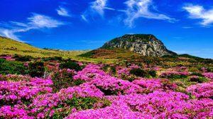 เที่ยวเกาะเจจู มรดกแห่งความมหัศจรรย์ทางธรรมชาติ เกาหลีใต้