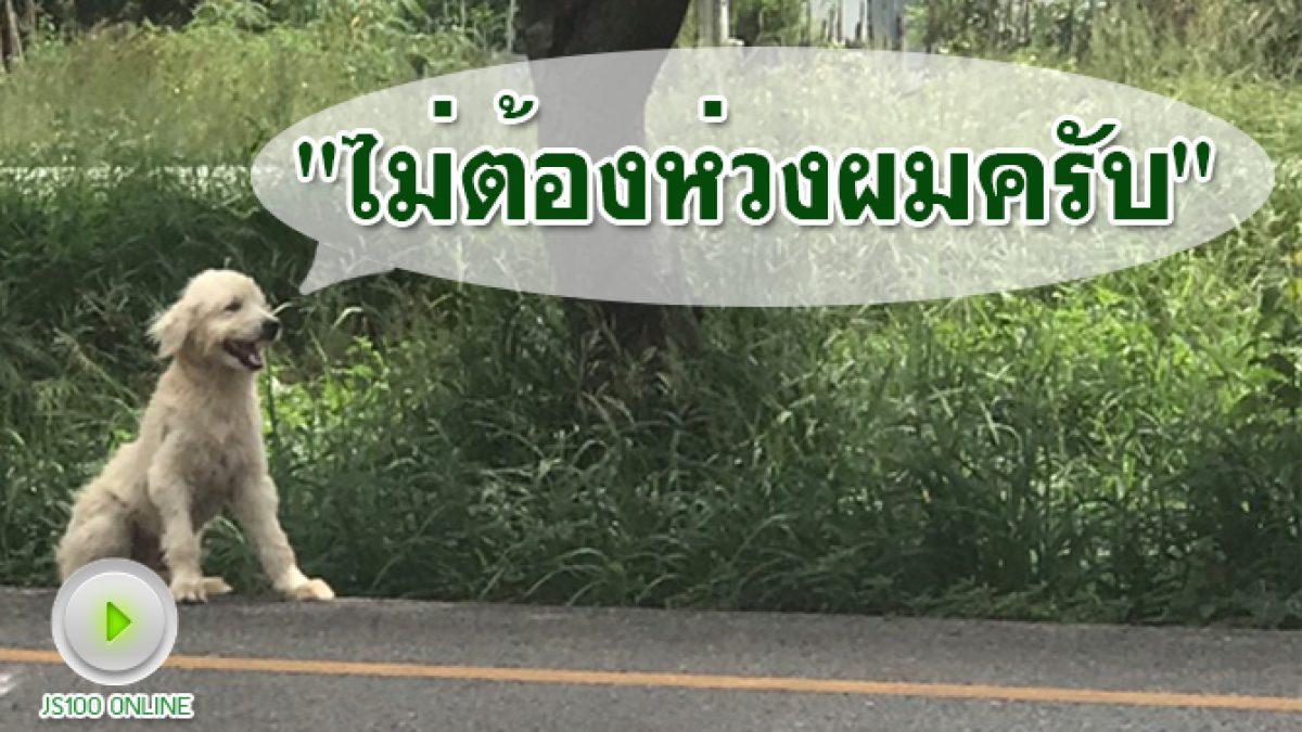 ไม่ต้องเป็นห่วง!! สุนัขสีขาวนั่งในร่องกลางถนนบายพาสชะอำ แค่ซุกซนวิ่งออกไปนั่งเล่นกลางถนน  มีคนดูแลให้อาหารประจำ