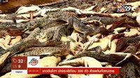 ชาวอินโดนีเซีย ฆ่าจระเข้เกือบ 300 ตัว ล้างแค้นกัดคนตาย
