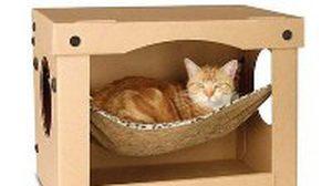 ที่นอนน้องแมว สุดคลู ตัวอย่างบ้านน้องแมว