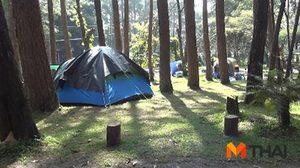 แพทย์เตือน! นทท.นอนกางเต็นท์ในป่าระวัง 'ไข้รากสาดใหญ่'