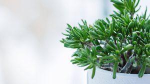15 พันธุ์ต้นไม้ที่ดีที่สุด สำหรับห้องทุกห้องในบ้านของคุณ